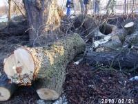 Baumschnitt 2010