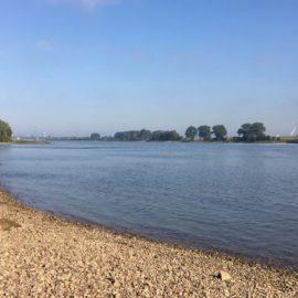 Rhein Angeln 2017